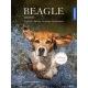 Beagle: Geschichte, Haltung, Erziehung, Beschäftigung